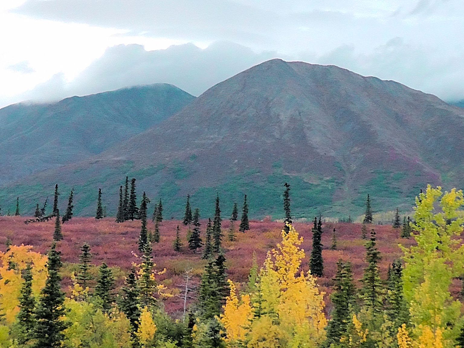 Fall Colors ('fall' in AK is in Aug!) near Denali National Park